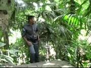 ทหารบ้าเย็ด พากันมาเย็ดในป่า ในค่ายไม่มีหี ล่อตูดกันสะเลยเงี่ยนจัดต้องลงที่รูก้น